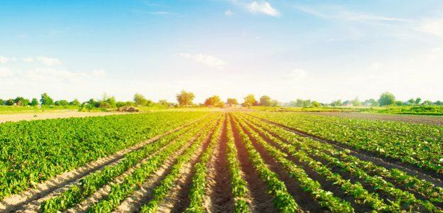 Sunny Sky Tropical Farms